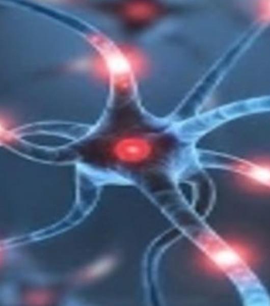 SLA, nuovo studio identifica i muscoli come potenziale bersaglio terapeutico