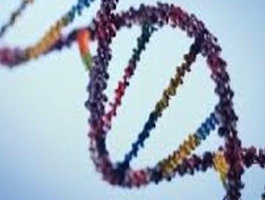 Acquisto materiale per la ricerca genetica sulla SLA