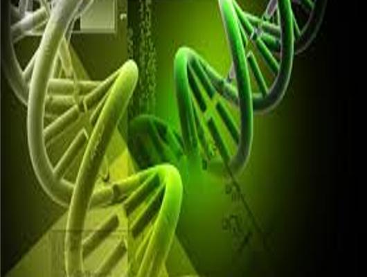 Il Dipartimento di Neuroscienze di Padova identifica un biomarcatore specifico per la SLA